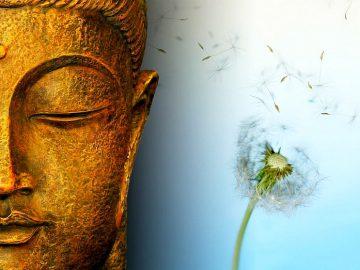 anicca_impermanence_seed_buddha