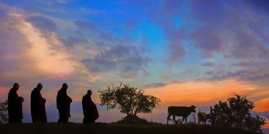 monks-almsround-ox-dawn